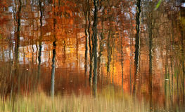Autumn forest reflexion. In the countryside  in Denmark Stock Images