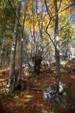 Autumn forest. At region Liptov, Slovakia Stock Photography