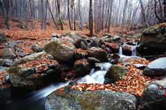 Autumn forest river Stock Images