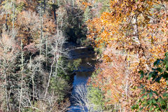Autumn Forest River Stockfotografie