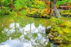 .Autumn forest with river Stock Image