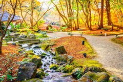 .Autumn forest with river Royalty Free Stock Photo