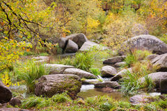 Autumn forest with the river Stock Image