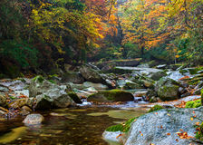 Autumn forest river. The autumn forest is colorful, everywhere is the beautiful scenery Stock Photography
