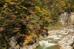 Autumn forest and river Stock Images