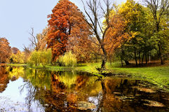 Autumn forest and river. Daylight in the woods Royalty Free Stock Image