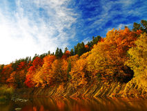 Autumn forest by the river Royalty Free Stock Image