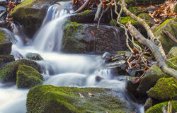 Autumn Forest River Stock Photography
