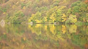 Autumn Forest by the River. Autumn forest grows near water, calm weather stock video