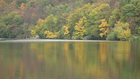 Autumn Forest by the River. Autumn forest grows near water, calm weather stock video footage