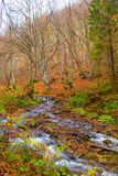 Autumn forest with river. And leaves lying on the ground Stock Photos
