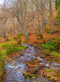 Autumn forest with river. And leaves lying on the ground Royalty Free Stock Photography