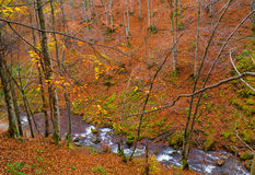 Autumn forest with river. And leaves lying on the ground Royalty Free Stock Photo