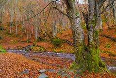 Autumn forest with river Royalty Free Stock Images