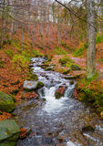Autumn forest with river Royalty Free Stock Photography