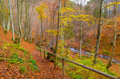 Autumn forest with river Royalty Free Stock Image