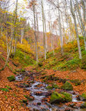 Autumn forest with river Stock Image