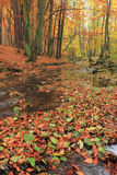 Autumn in forest with river Stock Photos