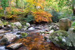 Autumn Forest River Royalty Free Stock Images