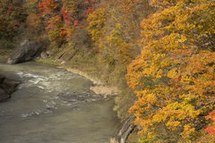 Autumn forest and river Stock Photos