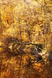 Autumn forest with river Stock Photos
