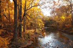 Autumn forest with river Royalty Free Stock Photos