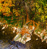 Autumn forest and river and rocks. Autumn forest and river and rocks Royalty Free Stock Image