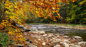 Autumn forest and river and rocks. Autumn forest and river and rocks Stock Photos