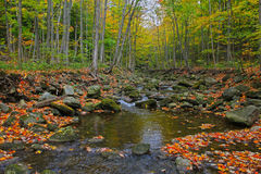 Autumn forest and river Stock Image