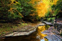 Autumn Forest River Stock Image
