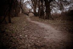 Autumn Forest Road Fotografía de archivo