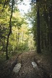 Autumn Forest Road photographie stock