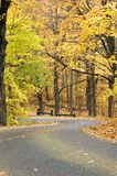 Autumn forest road. A narrow lane or road through woods or forest with colorful autumn foliage Royalty Free Stock Photography