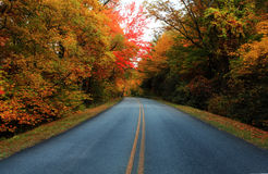 Autumn Forest Road. A road through the forest during autumn Stock Photography