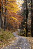 Autumn forest road. A narrow winding road trough the autumn or fall forest Stock Photo