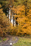 Autumn forest road. Image of the autum forest road - trees royalty free stock photo