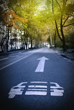 Autumn forest road. On both sides of the wooded mountain road Royalty Free Stock Photos