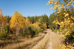 Autumn forest and road Stock Photos
