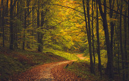 Autumn Forest Road Foto de Stock Royalty Free