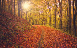 Autumn Forest Road Fotografia de Stock Royalty Free