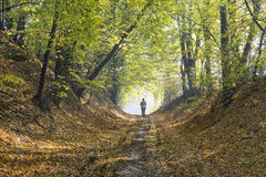 Free Autumn Forest Road Stock Photo - 46322680