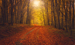 Autumn Forest Road Fotografia de Stock Royalty Free
