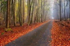 Autumn Forest Road Immagine Stock Libera da Diritti
