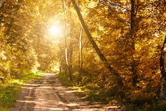 Autumn Forest Road Lizenzfreies Stockbild