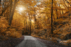Autumn Forest Road Stockfoto