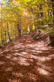 Autumn Forest Road photos libres de droits
