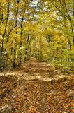 Autumn Forest Road fotografie stock libere da diritti
