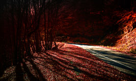 Autumn Forest Road Fotografia Stock