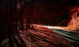 Autumn Forest Road Stockfotografie