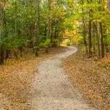 Autumn Forest Road Lizenzfreie Stockfotos